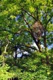 森林面孔 图库摄影
