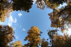 森林顶视图从下面 免版税库存照片