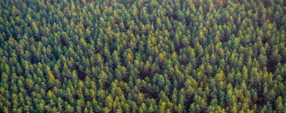 森林顶视图 免版税库存图片