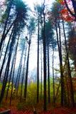森林颜色在秋天 库存图片