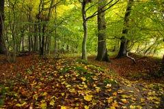 森林颜色在10月 免版税库存图片