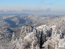 森林风景冬天 免版税库存图片
