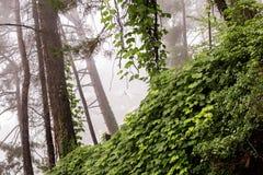 森林风景和阿布哈兹 免版税库存照片