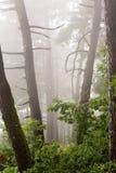 森林风景和阿布哈兹 免版税库存图片