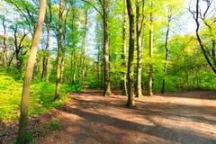 森林风景在一个晴天 免版税库存图片