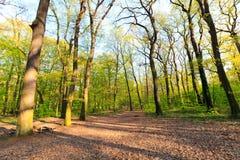 森林风景在一个晴天 图库摄影
