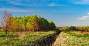 森林风景在与云彩的晚上天空下在阳光下 免版税图库摄影