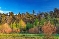 森林风景在与云彩的晚上天空下在阳光下 库存照片