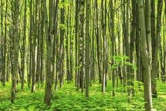 森林风景在与草活树和绿色的一个晴朗的春天夏日离开在分支在公园植物的室外图象 库存照片
