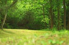 森林风景在夏天 库存照片