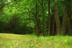 森林风景在夏天 免版税图库摄影