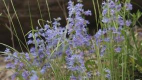 森林风景在春天或夏天 影视素材