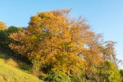森林风景在秋天季节期间的与警告颜色 库存照片