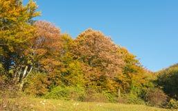 森林风景在秋天季节期间的与警告颜色 图库摄影