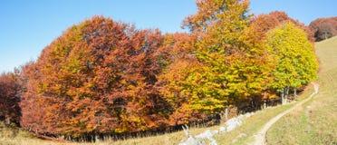 森林风景在秋天季节期间的与警告颜色 库存图片