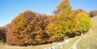 森林风景在秋天季节期间的与警告颜色 免版税库存图片