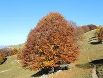 森林风景在秋天季节期间的与警告颜色 免版税图库摄影