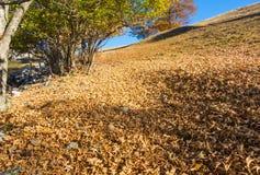 森林风景在秋天季节期间的与警告颜色 免版税库存照片