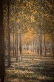 森林风景在秋天 图库摄影