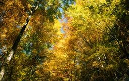 森林风景在秋天 库存图片