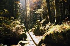 森林风景在秋天 库存照片