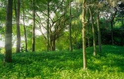 森林风景有雾和光束的在自然背景中 免版税库存图片