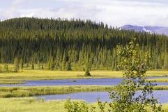 森林风景湖的杉木 图库摄影