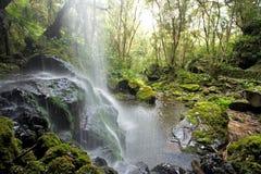 森林风景瀑布 图库摄影