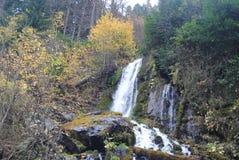 森林风景瀑布 免版税库存照片