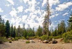 森林风景的内华达 免版税库存图片