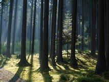 森林风景的看法 库存图片