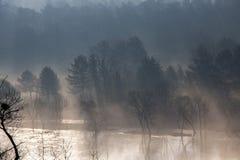 森林风景神秘的看法  免版税图库摄影