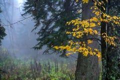 森林风景风景秋天的 免版税库存照片