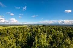 森林风景,山景 免版税库存照片