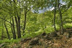 森林风景-由后照的落叶树 免版税库存照片