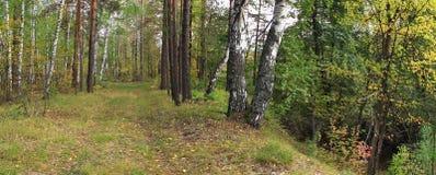 森林风景 免版税库存图片