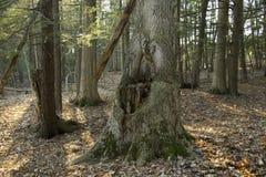 森林风景 库存照片
