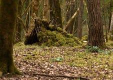 森林风雨棚 库存照片