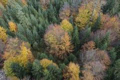 黑森林高角度拍摄  免版税库存图片