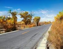 森林高速公路路 免版税库存照片