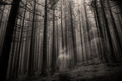 森林鬼魂 免版税库存照片