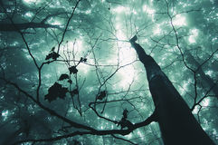 森林魔术结构树 免版税图库摄影