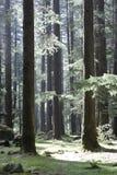 森林魔术 库存图片
