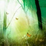 森林魔术 免版税库存照片