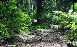 森林魔术 图库摄影