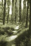 森林黑白照片 免版税库存图片