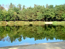 森林,乌克兰 免版税库存照片