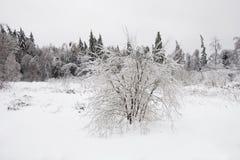 冻森林,俄罗斯,莫斯科地区 33c 1月横向俄国温度ural冬天 免版税库存照片