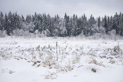 冻森林,俄罗斯,莫斯科地区 33c 1月横向俄国温度ural冬天 库存照片