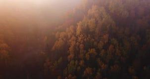森林,寄生虫空中英尺长度起动批评从往森林的云彩缓慢,金黄和红颜色树, 股票视频